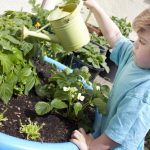 little boy watering his own little garden in summer